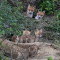 Am Fuchsbau